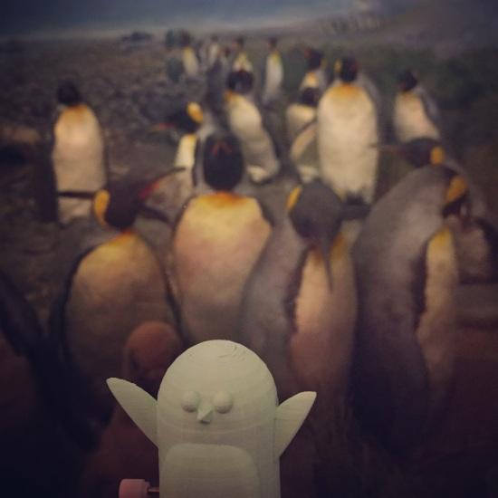 Tinkercad, 3d design, education, project, maker faire, penguins, biology, science
